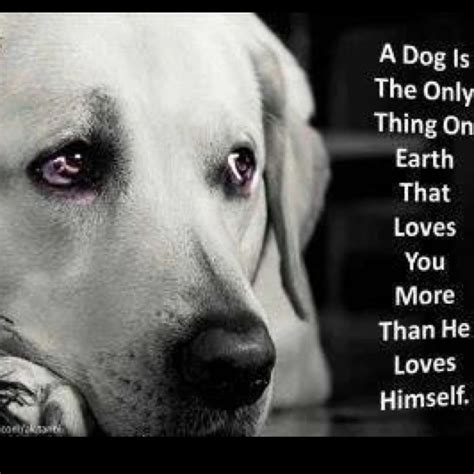 rescue dogs maine rescue me quotes quotesgram