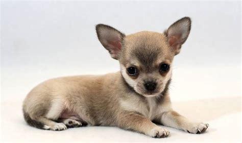 mascotas para un piso mascotas para un piso hogar y ideas de dise 241 o doxko co