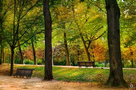 free park autumn in the park background freeartbackgrounds