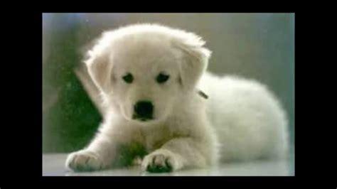 le piu mondo immagini le 10 razze canine pi 249 al mondo