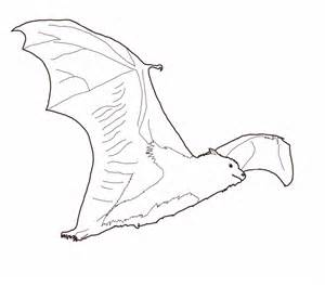 bat coloring page free printable bat coloring pages for