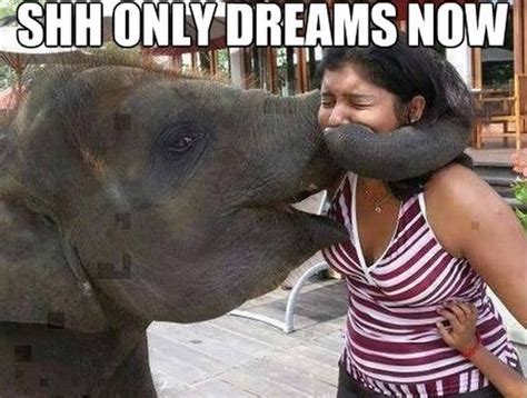 Meme Dream - funny only dreams jokes meme funny pictures jpg