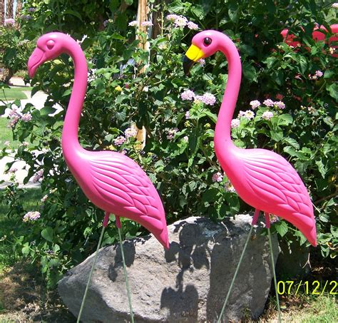 plastic flamingos yard flamingos the pink flamingo blog