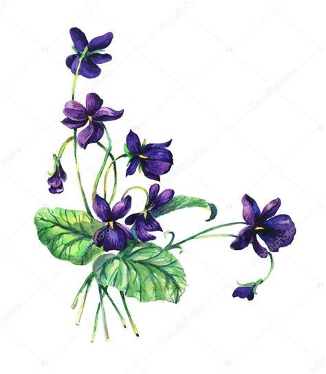 violette fiore violetta fiore disegno