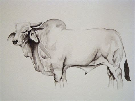 brahman bull watercolor by prettyimmature on deviantart