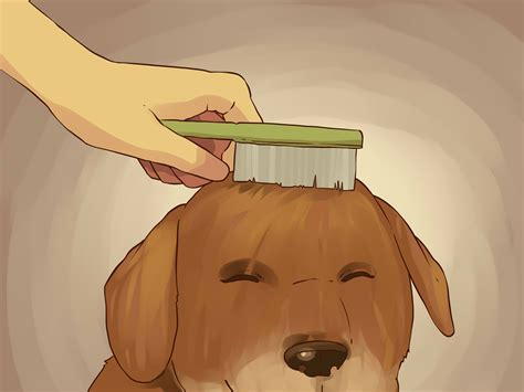 when to give a puppy a bath how to give a small a bath with pictures wikihow