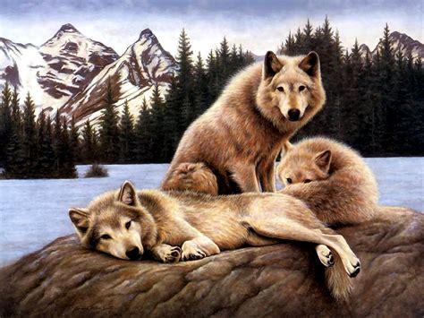 fotos animales juntos imagenes animales y la naturaleza juntos hd animales