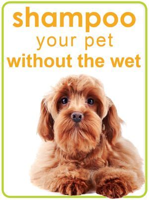 can shih tzu eat corn 284 best images about dogs essential oils on allergies for dogs and your
