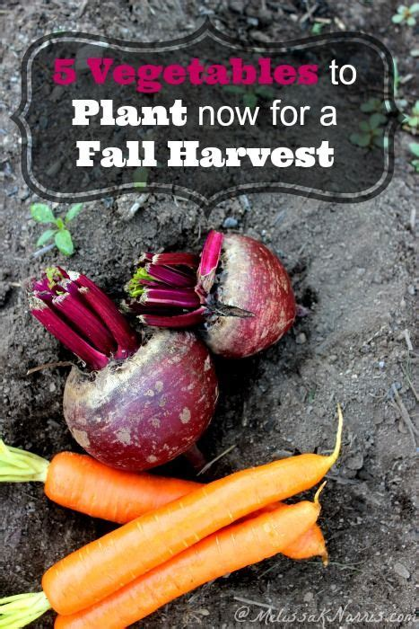 Which Ones Are Fall Fruits by 129 Best Gardening Images On Gardening