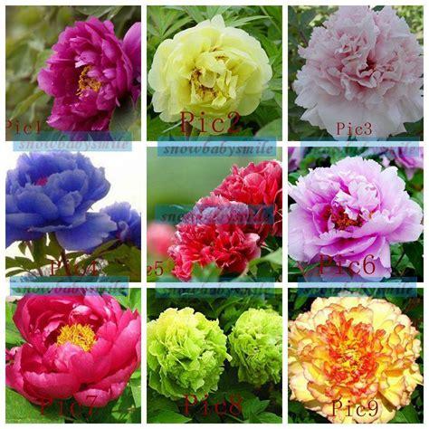 35 varieties rare china s peony seeds paeonia suffruticosa flower tree plant f s ebay