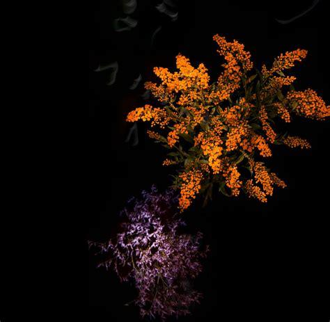 designboom tumblr flower petal fireworks by sarah illenberger ring in the