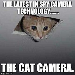 Voyeur Meme - ceiling cat meme imgflip