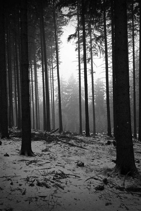 black and white woodland wallpaper black and white landscapes trees forest monochrome