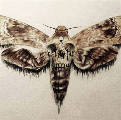 death head moth tattoo 25 best ideas about moth on