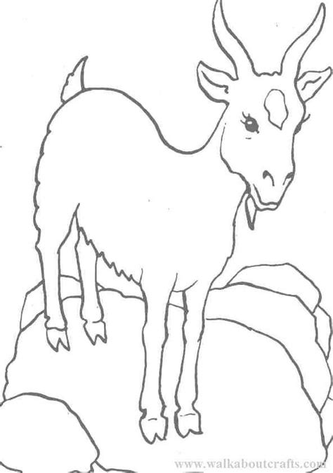 boer goat coloring pages goat coloring pages az coloring pages