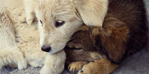 puppy mills articles kiringie me take against puppy mills
