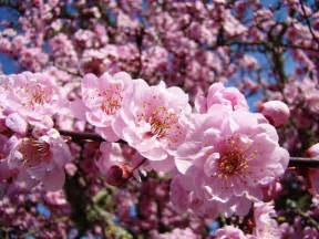 spring tree pink flower blossoms colorful baslee troutman