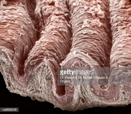 pictures of vigina vagina fotograf 237 as e im 225 genes de stock getty images