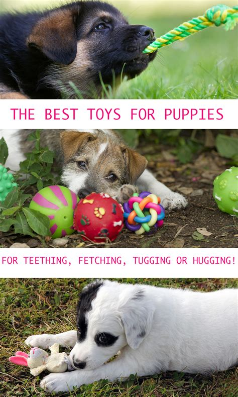 best puppy toys puppy toys the best toys for puppies the happy puppy site
