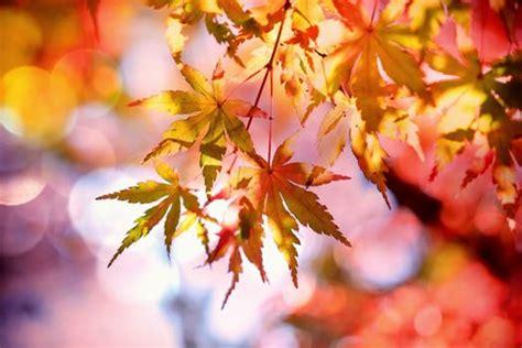 Photo Lookup Free Free Stock Photos Of Autumn 183 Pexels