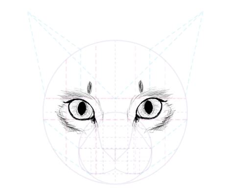 cat eye drawing how to draw animals cats and their anatomy