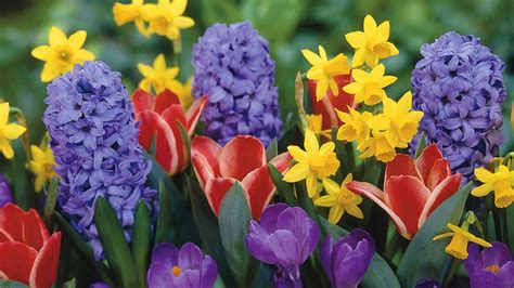 photos of spring flowers spring flowers free large images