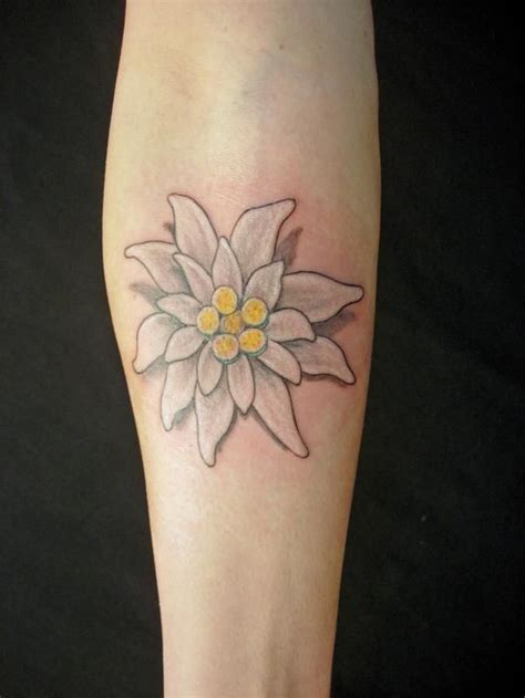 edelweiss tattoo 17 best ideas about edelweiss on german