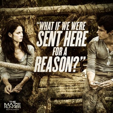 maze runner film wiki the maze runner film images movie quotes hd wallpaper and