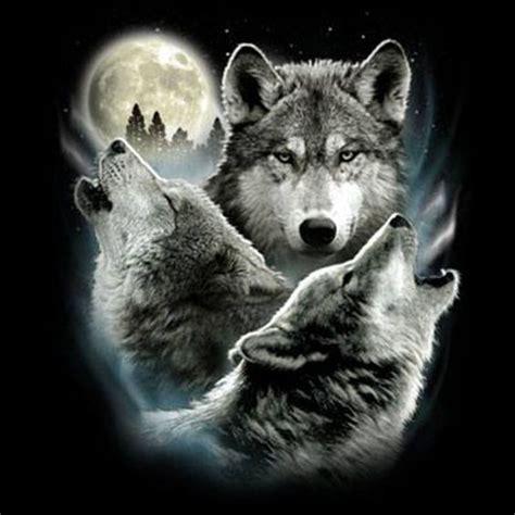 google themes wolf wolves wallpaper google zoeken wolves pinterest