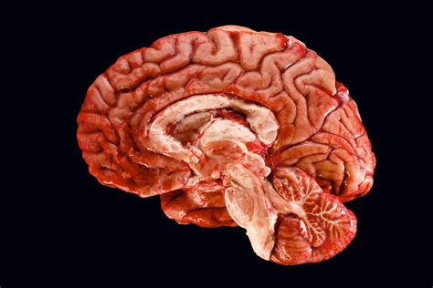 Brains Not Is Wired The Entertainment by Generosity Can Make Your Brain Quot Happier Quot Says Study Newsgru