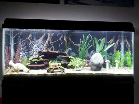 aquascaping african cichlid aquarium 1000 ideas about 55 gallon tank on pinterest diy