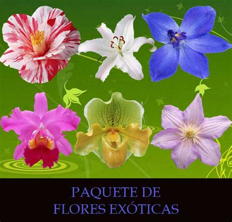 imagenes gratis flores exoticas imagenes de flores exoticas con sus nombres imagui