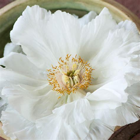 peony the best varieties for your garden books top tree peony varieties