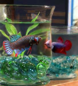 Fish Home Decor Accents by Gallery For Gt Cool Fish Bowl Decorations