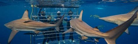 dive with sharks in south africa fly fighter jets more adventurefit