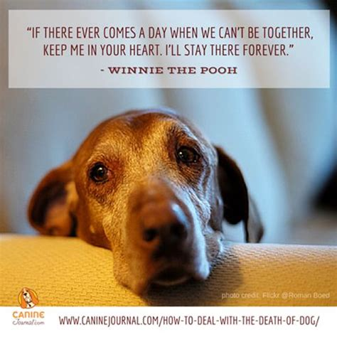 puppy died 1000 images about pets no longer with us on inspirational quotes about