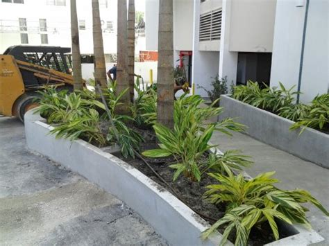 Designer 04 Variegated by Variegated In Miami Miami Landscaping