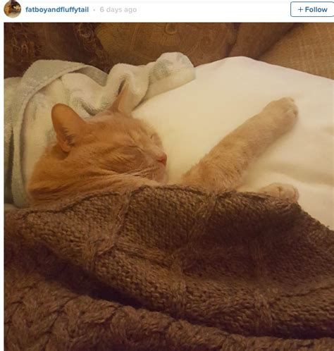 tuck into bed cats pictured cozy and tucked into bed is the new viral
