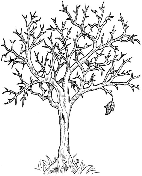 narra tree coloring page spring tree clipart black and white clipartxtras