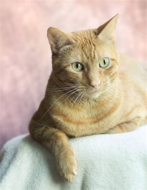 How To Soften Cat Stool by Giveaway Excerpt How To Take Beautiful Pictures Of Your Cat Katzenworld