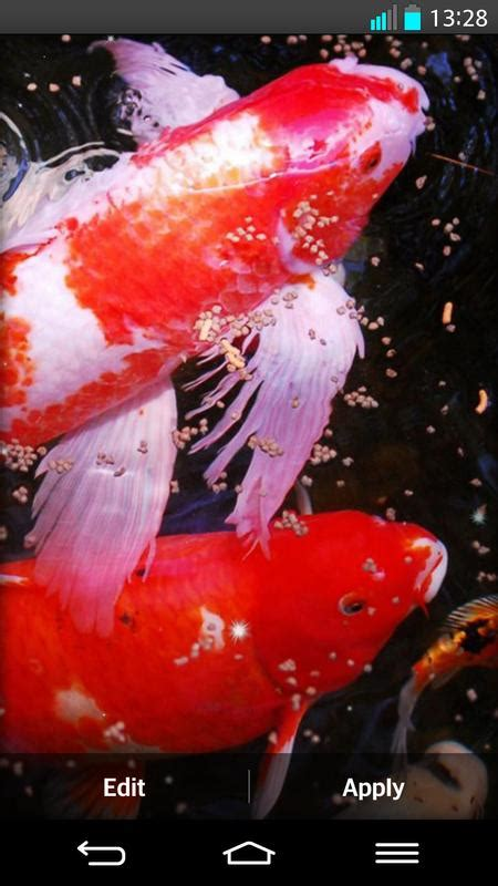 Koi Fish Live Wallpaper Apk