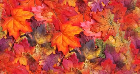 tumblr themes free autumn fall leaves tumblr twitter header images