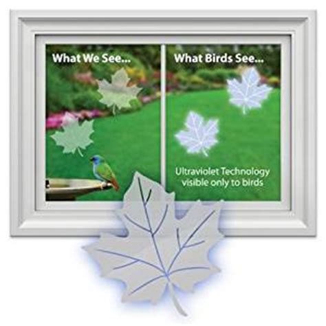 amazon com window alert maple leaf decal bird window