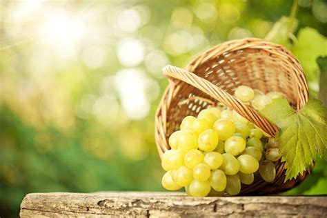 uva da tavola nomi uva da tavola uva uva da tavola