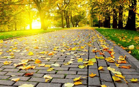 full hd video free download the beautiful autumn wallpaper full hd free download