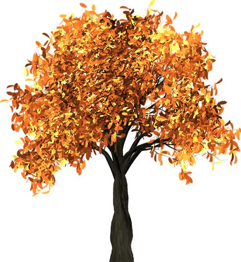 what makes leaves change color what makes leaves change colour in autumn the petri dish