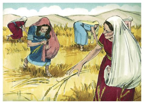 themes in book of ruth file book of ruth chapter 2 11 bible illustrations by
