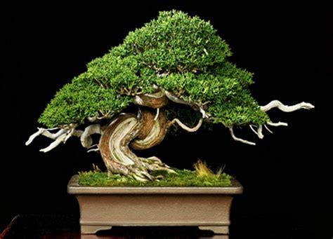 here s a thought bonsai bonsai plant care