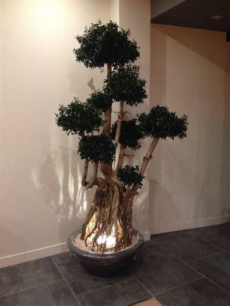 plantas de interior sin luz plantas de interior para una casa sin luz natural
