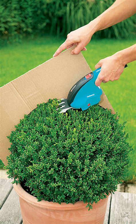 wann garten bepflanzen buchsbaum schneiden baumschnitt selbst de